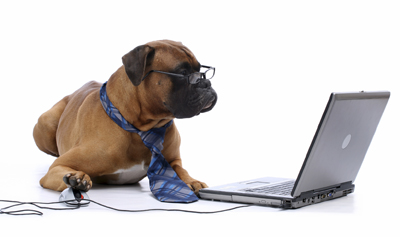 Boxer Registering as a New Client