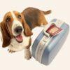 Pet Boarding Pet Passport