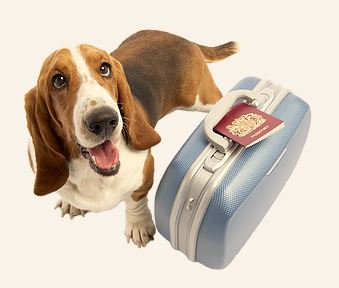how to get a dog passport uk